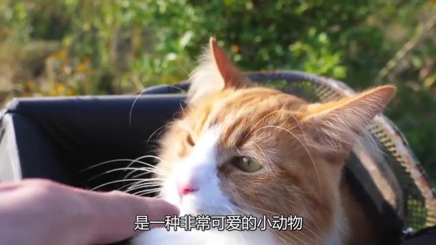 """成精了!奇葩猫咪走出六亲不认的步伐,这正宗""""猫步""""还有谁?"""