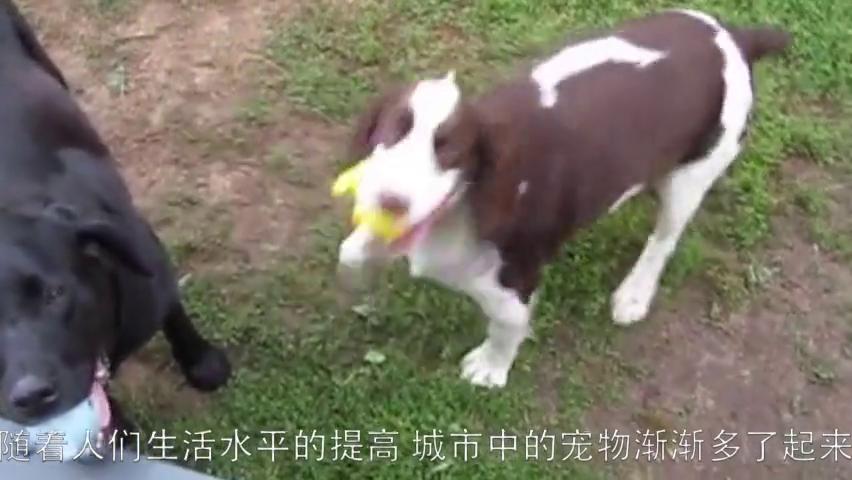 家里的宠物狗狗常见的几种寄生虫病,铲屎官不可不知