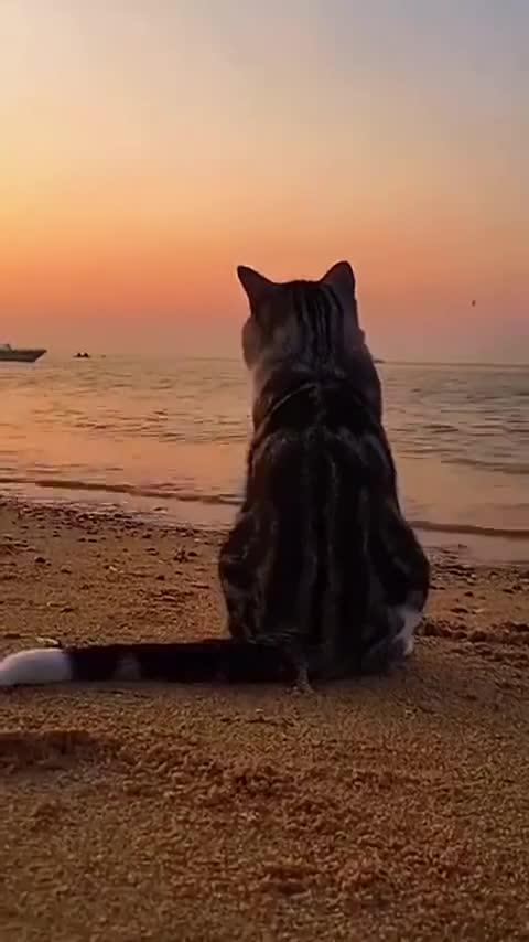 喵:等水退了,偶要吃光这里所有的鱼
