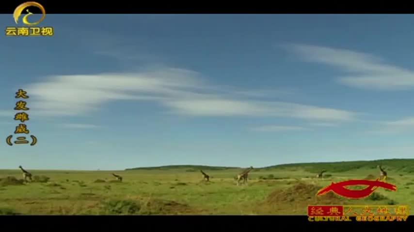 公鹿低着头品尝母鹿的尿液,了解其中的荷尔蒙水平!