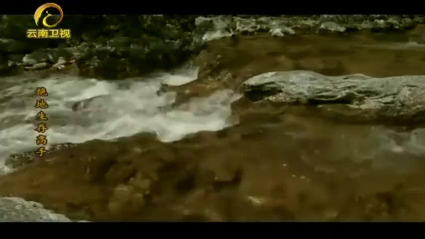 卡斯特蝰蛇适应力强,在海拔1200米的荒野也能生存!