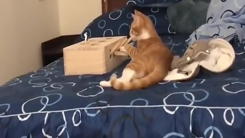 主人给猫买了新玩具,以为它不会玩,结果它玩得很在行