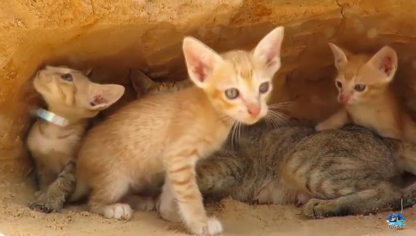 蟒蛇找到野猫的洞穴,猫妈妈丢下孩子逃跑,无助小猫难道在劫难逃