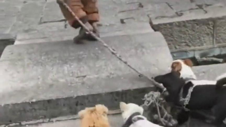 街头遇见的暖心事情,流浪汉收留一群流浪狗狗,太感人了