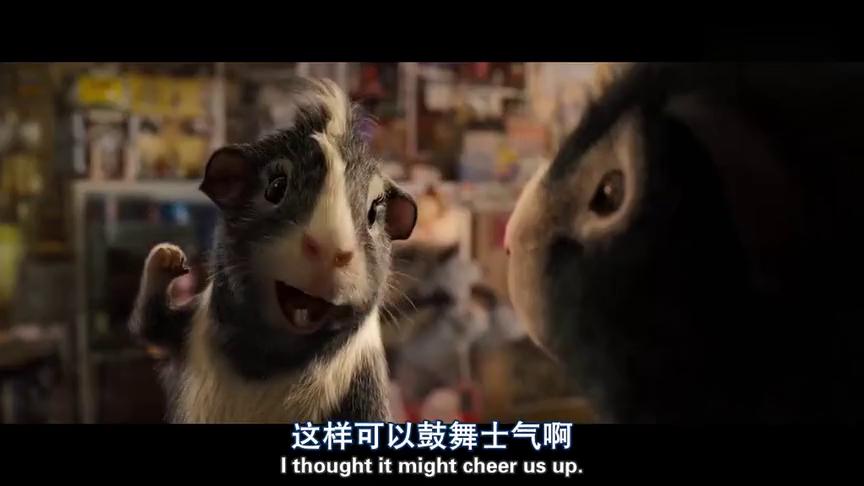 豚鼠特工队来到宠物店,遇到只脾气暴躁的仓鼠