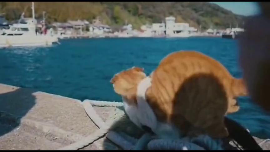 这两只猫到底有多大的仇?竟然抱在一起跳河了!一定要看到最后