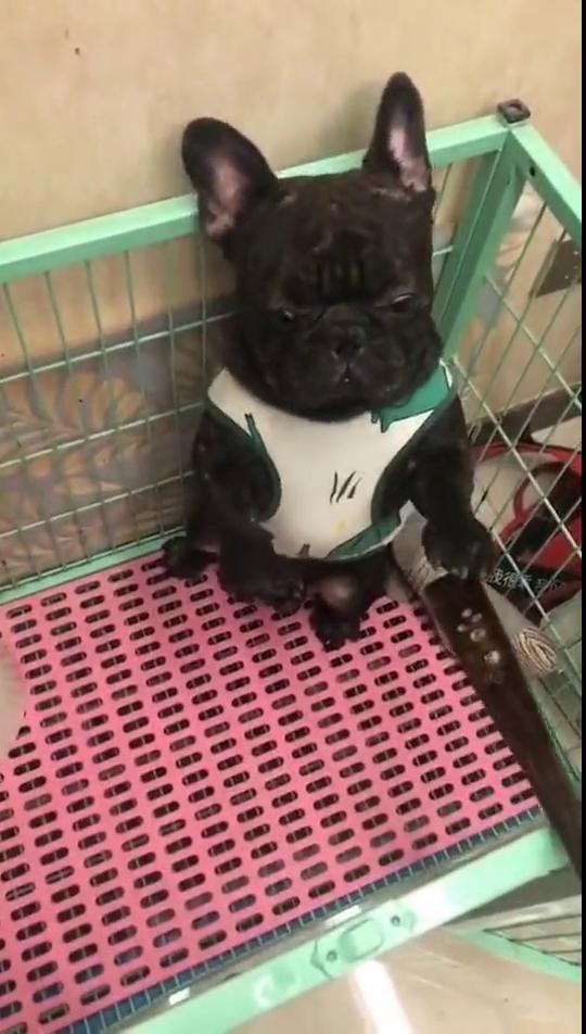 狗子:我还是个孩子呢,尿床很正常啊!