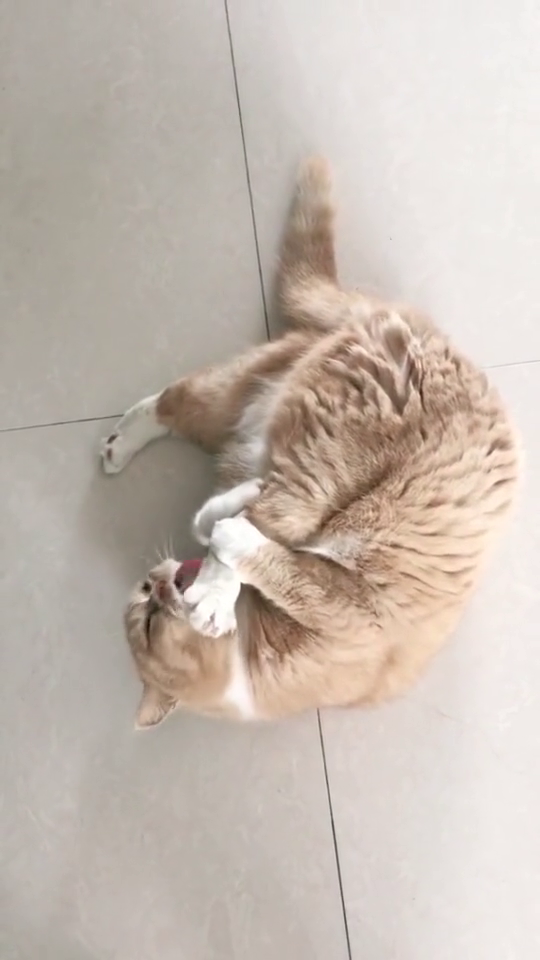 猫:我这猫爪真香呀,真好吃!