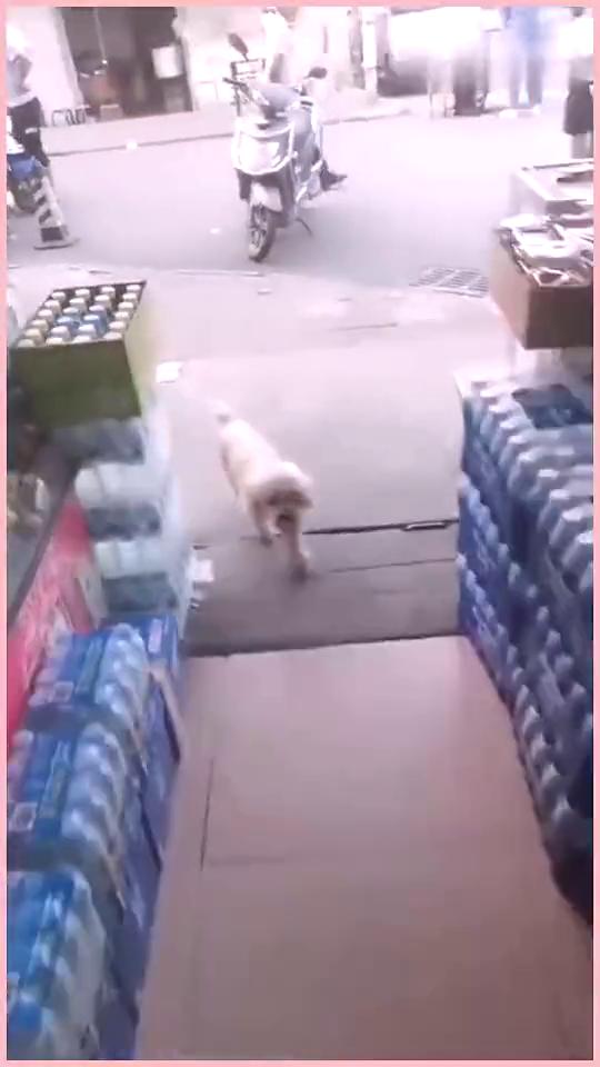 狗子自己拿钱买火腿,主人快养不起你了