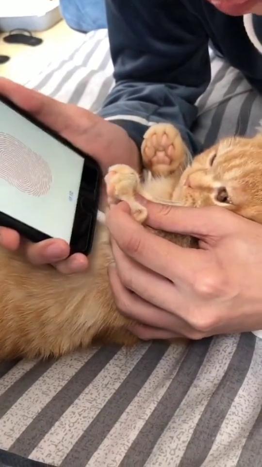给猫咪录个指纹锁