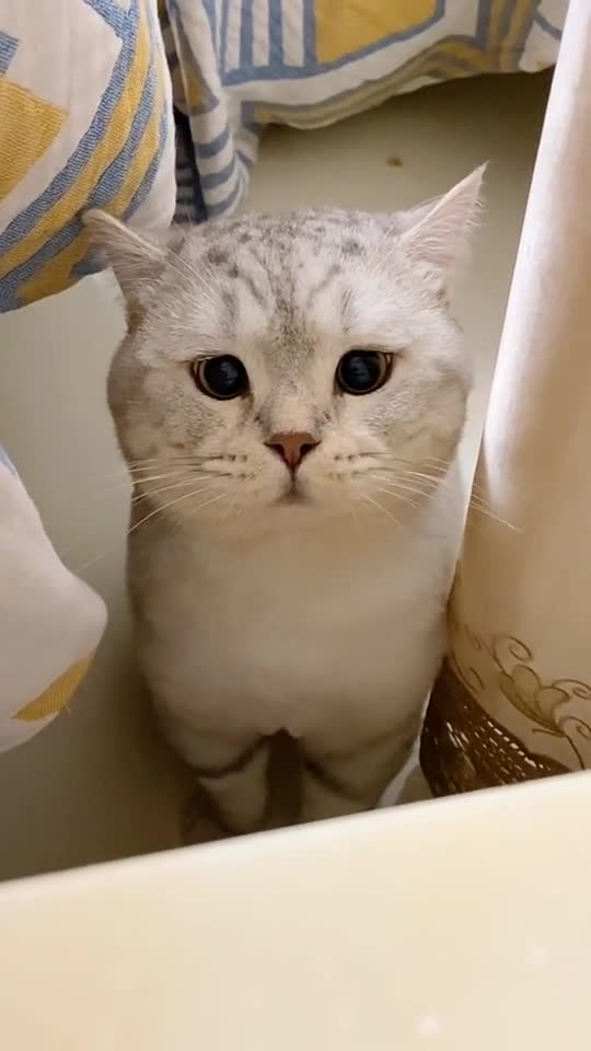 """我的猫成精了,竟然向我喊出""""我要鱼""""!"""