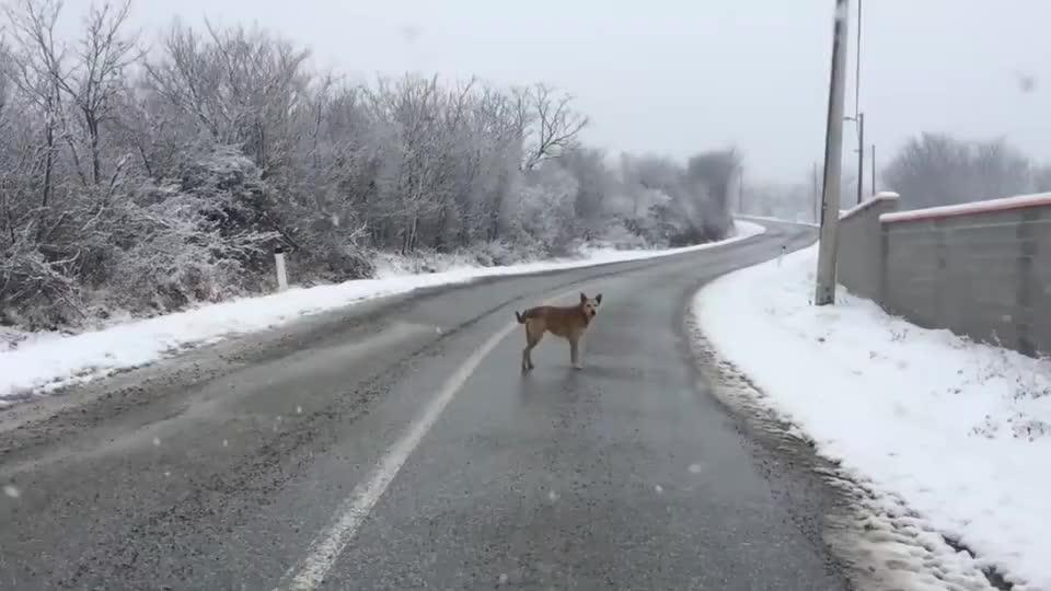一只流浪狗在雪地里拦车,男子赶紧下车查看,结局太暖了
