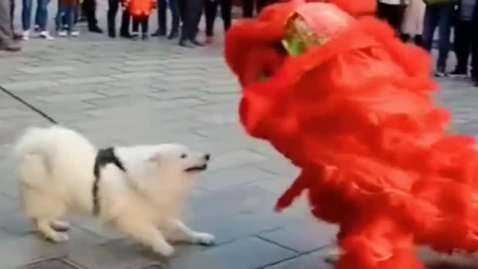 狗:不就舞狮嘛,我也会