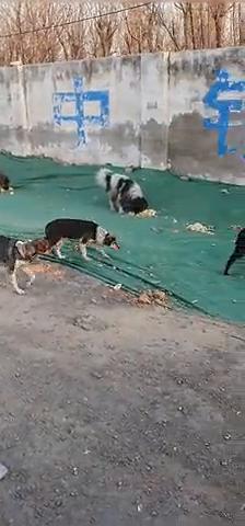 好多的狗狗啊