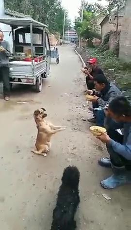 流浪狗和农民工的故事,狗狗聪明,人们善良