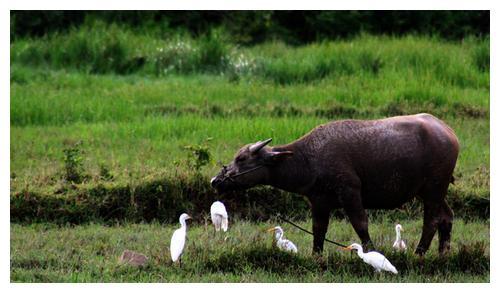 """七月上旬惊现""""金牛当空"""",属牛人的好运要来了,接福"""