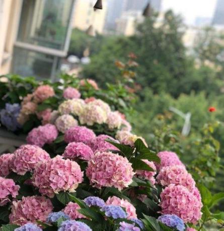 7月初,这2种花的枝条不要扔,趁现在扦插,天凉养成一大片