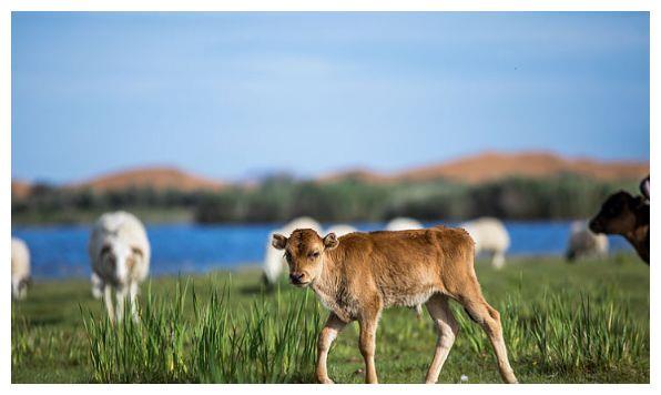 """生肖牛的人,2月将迎来""""天翻地覆""""的大转变,家有属牛的速看"""