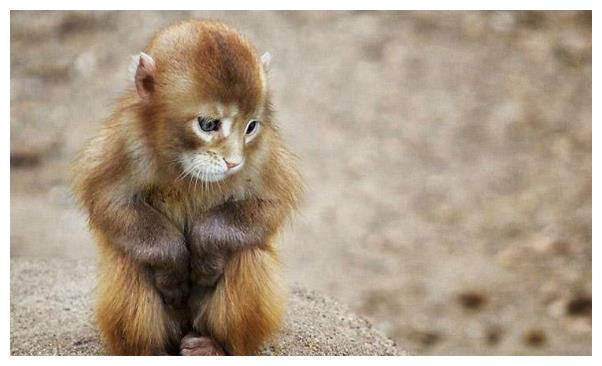 """再熬3天,生肖猴这辈子最大的贵人就会出现,到时变成""""大金猴"""""""