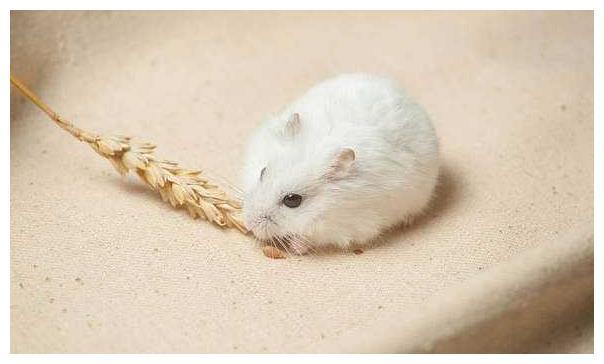98岁高僧说了:72年生肖鼠12月中要大难临头,能躲过后福无穷!