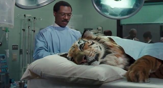 老虎躺在手术室里,说还是和以前一样疼,医生们正在治疗