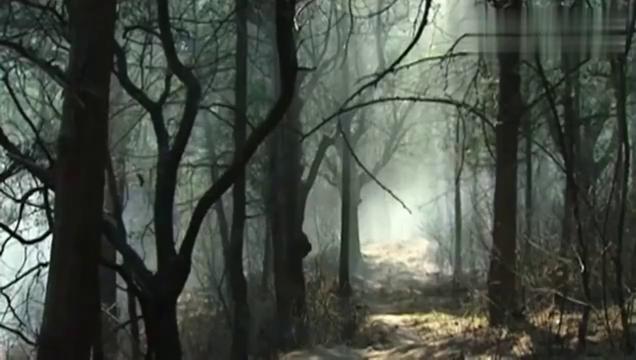 林冲劫道遇到杨志,看豹子头大战青面兽,唢呐一响实在太经典!
