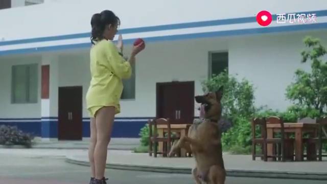 警犬来啦:警犬差点被女友害死,梁粤瞬间暴怒,就差直接动手了