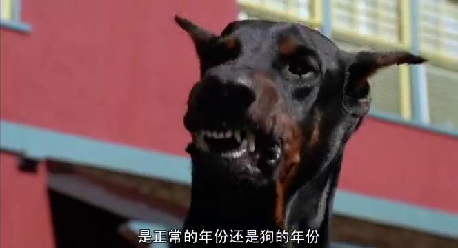 加菲猫被狼狗抓到,谁知小狗救它一命,它却丝毫不领情