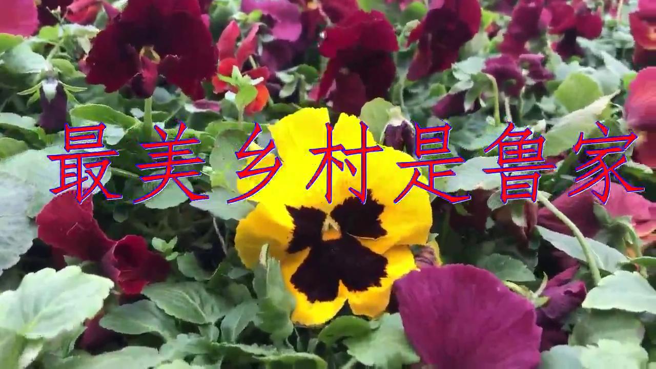 张津涤的一首《最美乡村是鲁家》,真好听,特别精彩