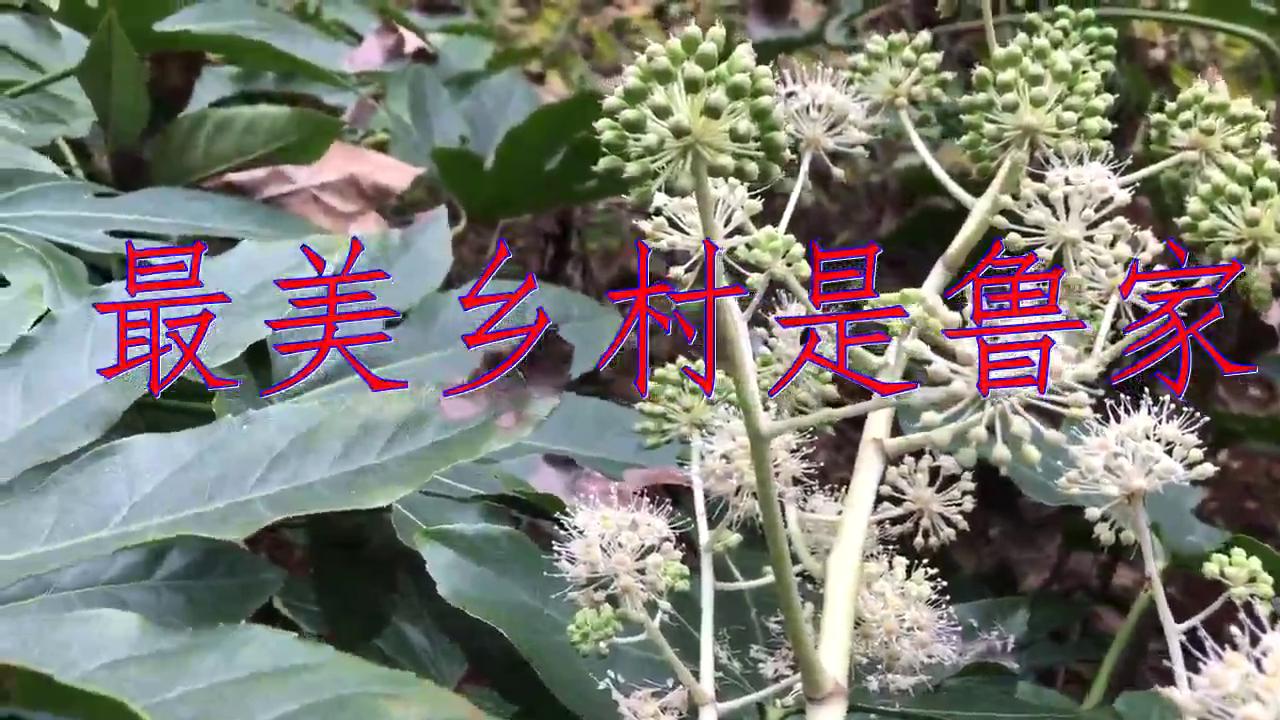 张津涤的一首《最美乡村是鲁家》,歌好美好甜,好怀念!
