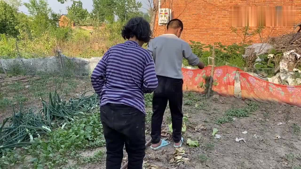 这才是向往的农村生活,小琳挖土,奶奶和妈妈负责栽,秋收吃红薯