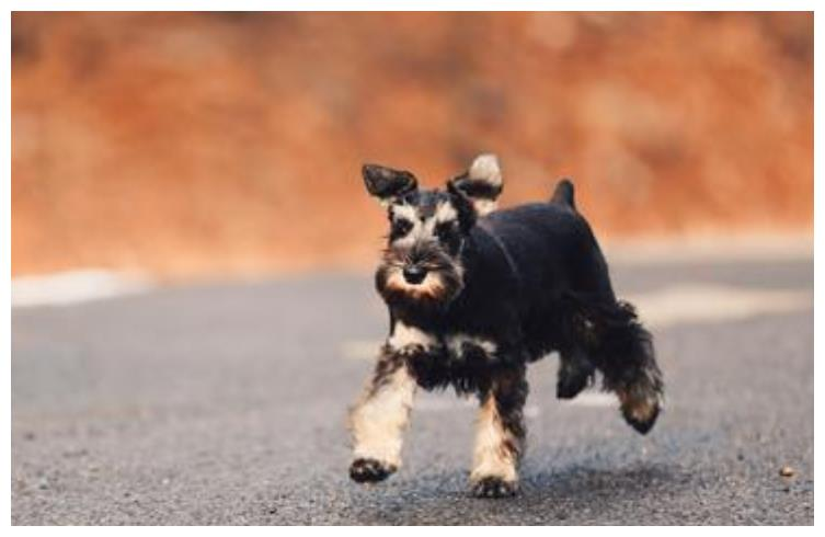 流浪狗被失聪女孩收养后成为服务犬,照顾主人的生活起居