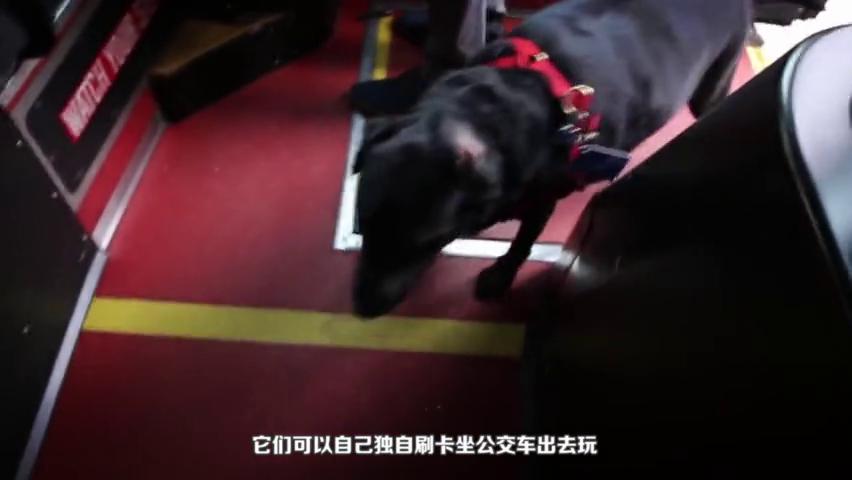 狗狗因为一根树枝意外走红,感觉物理学的不如狗啊,视频记录过程