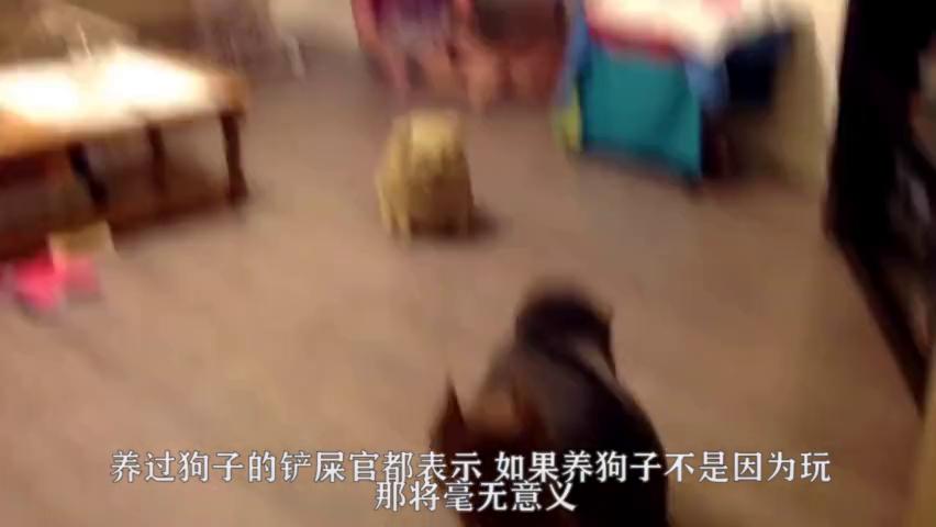 趁着狗狗看恐怖片,主人突然伸出手,接下来狗子的反应太逗了!