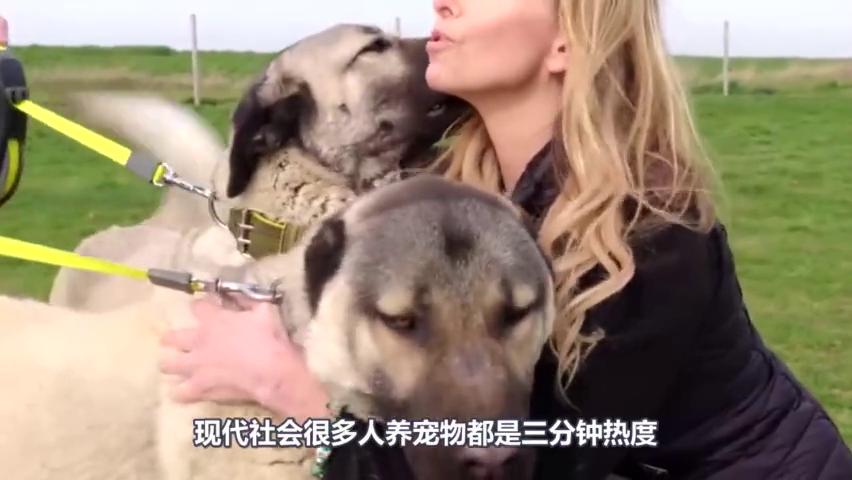 救援队发现一只失足掉入井中的狗狗,险些就有生命危险