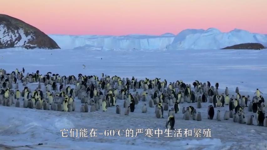 七只企鹅排队下楼梯,最后一只才是高手,网友:它只是离线了!