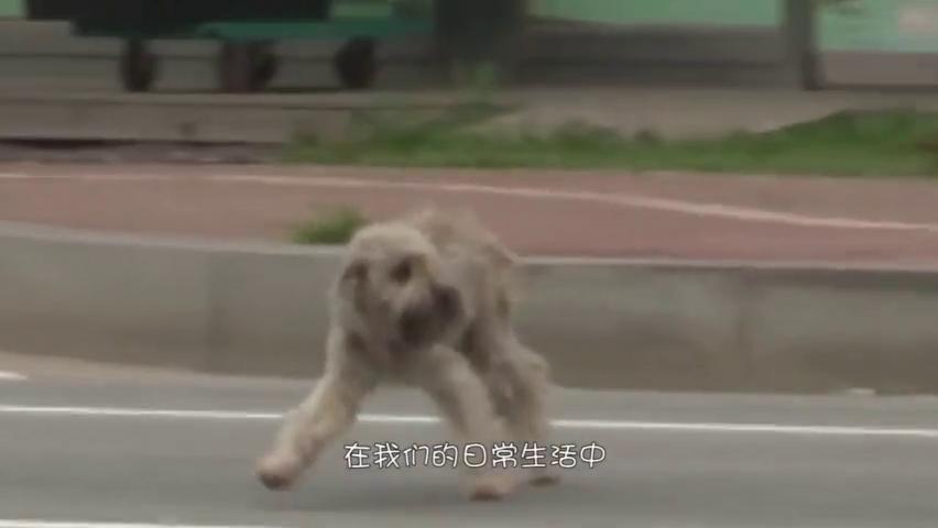 头戴塑料管多年的流浪狗,拿下塑料之后,发现狗狗的意外惊喜!