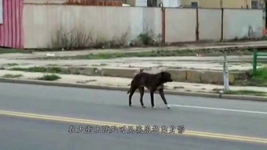 头戴塑料管多年的流浪狗,拿下塑料之后,发现狗狗的意外惊喜
