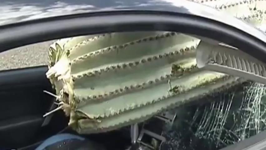 难以置信!司机驾跑车撞上巨大仙人掌,挡风玻璃被刺穿,太惨了!