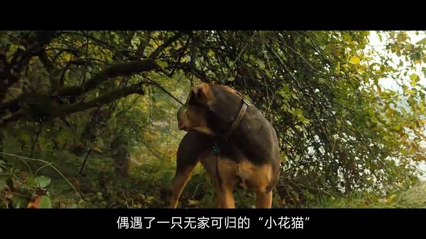 流浪狗救下了一只流浪猫,等它长大后才发现,竟然是一只美洲狮