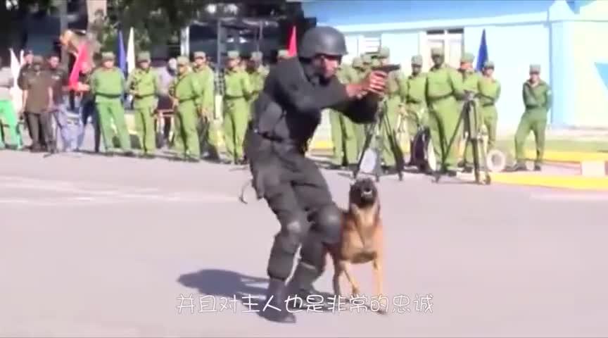 主人给狗狗按摩,看着狗狗享受的样子,主人都要笑喷了