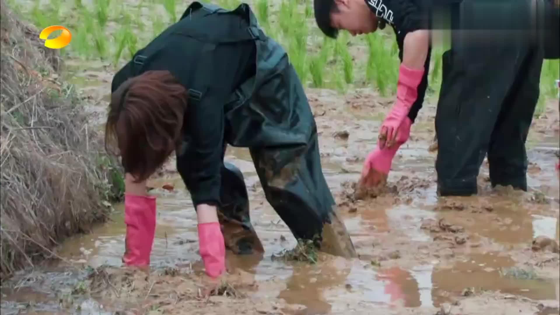 徐峥第一次下地插秧,双手双脚全是泥巴,直言爱上这种感觉
