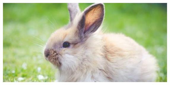 """善恶终有报:揭露""""生肖兔""""的晚年宿命,命运真不是一般人比得了"""