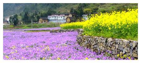 重庆涪陵大木花谷
