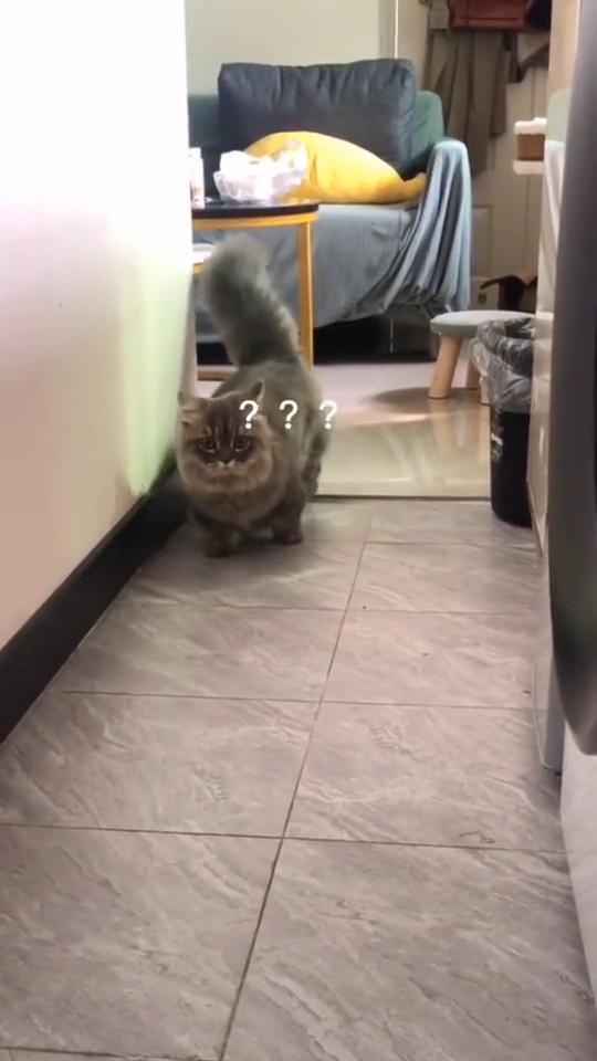 美女上厕所没带纸,竟然想让猫咪做这种事,还好跑得快