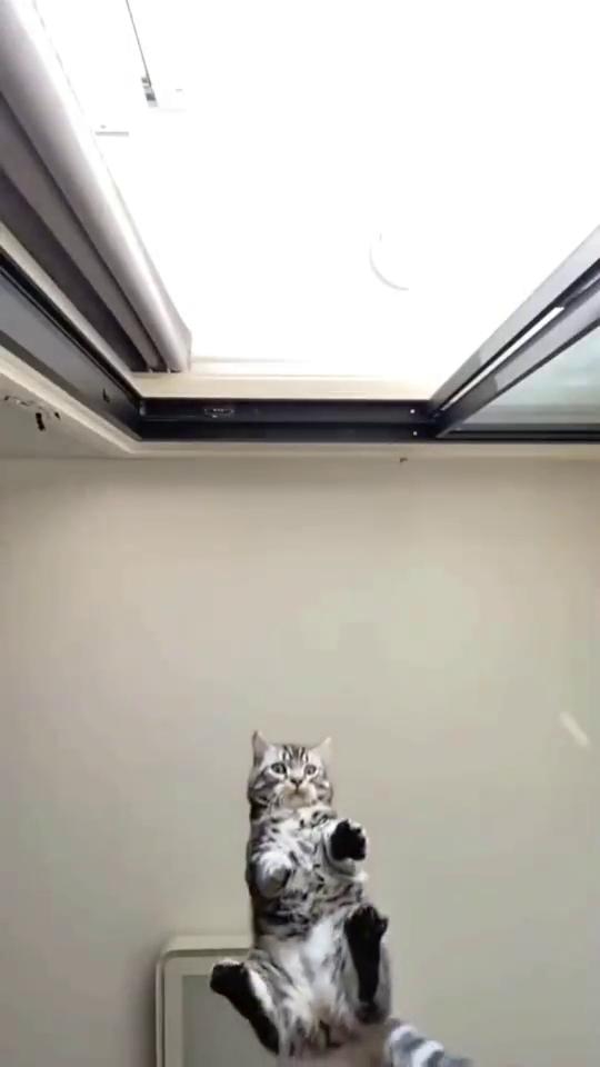 托尼说,把猫给我!