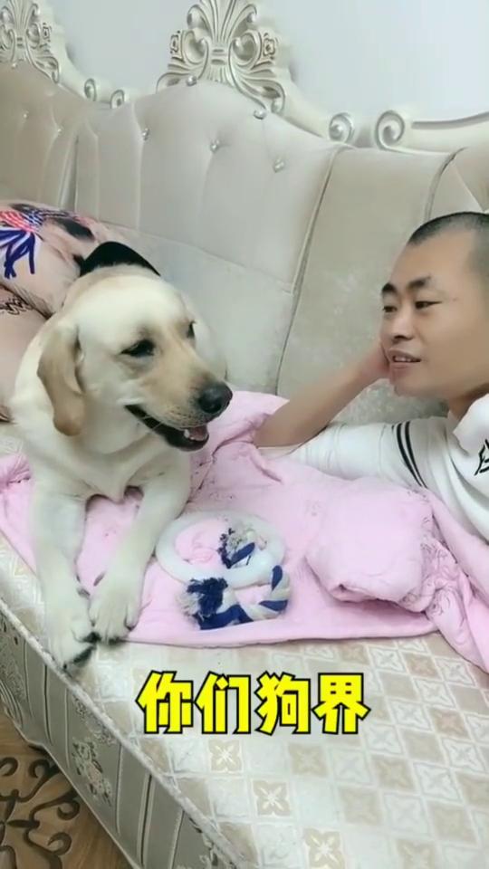 这只狗狗可以上清华了,和人类沟通能力竟然这么强!