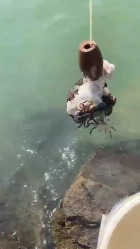 赶海钓螃蟹