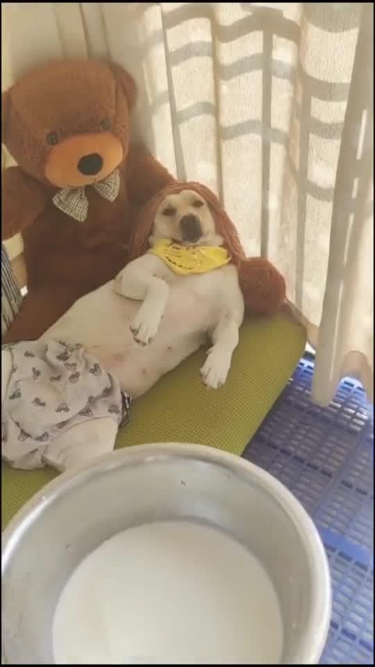 给狗狗喂牛奶,直接拿盆装,实在是不讲究!