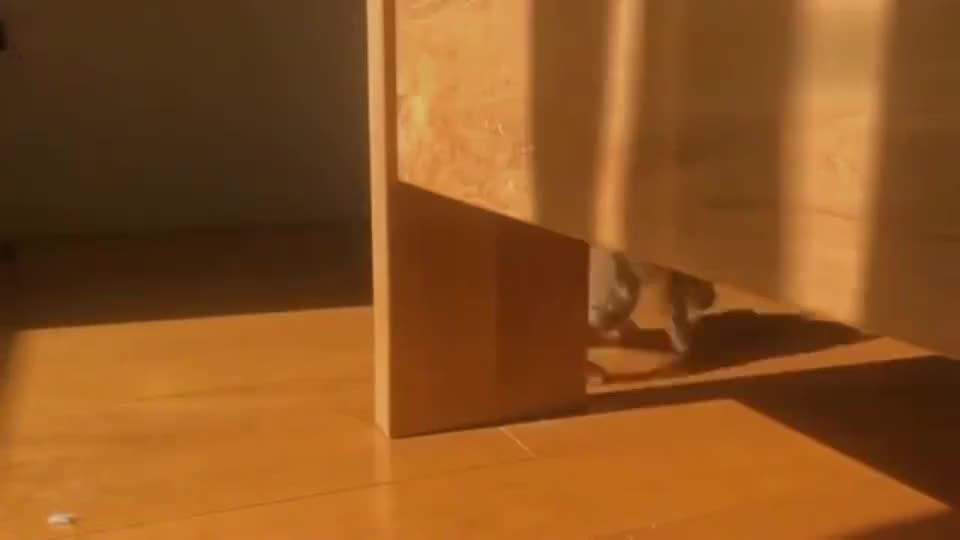 猫咪:平常心来云吸猫,看流浪橘猫蹦跶